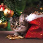 Hay que tener cuidado con los gatos, que tienen acceso todo tipo de adornos