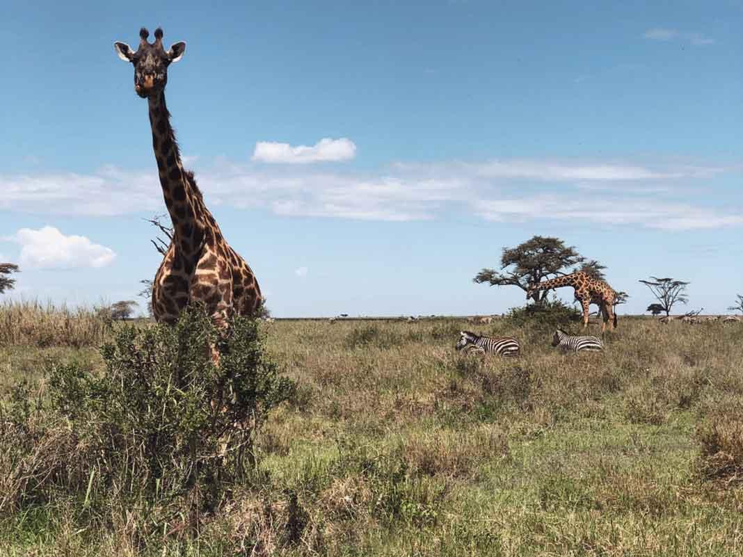 Marielena dice sentirse en paraíso terrenal, al ver a los animales y paisajes de Tanzania