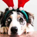 Que tu mascota pase unas fiestas decembrinas muy seguras