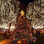 Nights Of Lights Plaza Tree