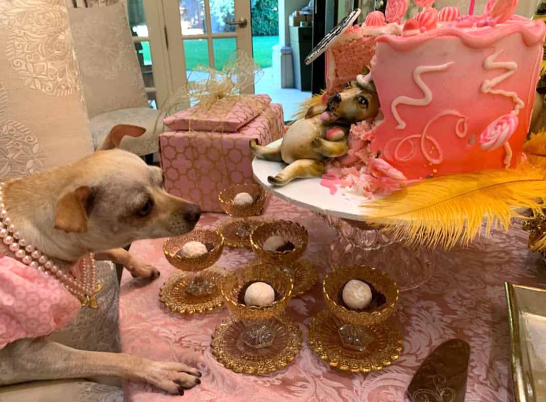 Baguette se acercaba a la mesa porque le llamaba la atención el perro del pastel