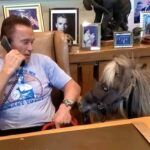 Parece que el pony asesora al actor en sus negocios, pues lo acompaña a su oficina