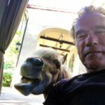 Aquí una simpática selfie del actor con su pony