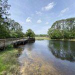 Treaty Park pond trail 3